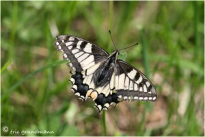 https://www.waibe.fr/sites/photoeg/medias/images/__HIDDEN__galerie_21/2019-machaon_01.jpg