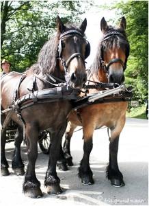 https://www.waibe.fr/sites/photoeg/medias/images/__HIDDEN__galerie_45/chevaux_012.jpg