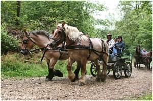 https://www.waibe.fr/sites/photoeg/medias/images/__HIDDEN__galerie_45/chevaux_013.jpg