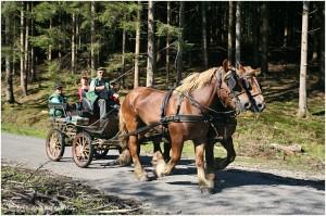 https://www.waibe.fr/sites/photoeg/medias/images/__HIDDEN__galerie_45/chevaux_014.jpg