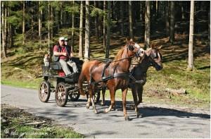 https://www.waibe.fr/sites/photoeg/medias/images/__HIDDEN__galerie_45/chevaux_015b.jpg