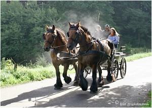 https://www.waibe.fr/sites/photoeg/medias/images/__HIDDEN__galerie_45/chevaux_017.jpg