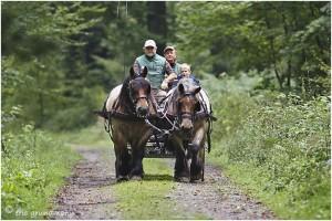 https://www.waibe.fr/sites/photoeg/medias/images/__HIDDEN__galerie_45/chevaux_018.jpg