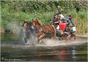 https://www.waibe.fr/sites/photoeg/medias/images/__HIDDEN__galerie_45/chevaux_02.jpg
