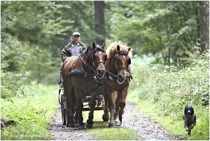 https://www.waibe.fr/sites/photoeg/medias/images/__HIDDEN__galerie_45/chevaux_021.jpg