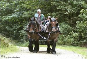 https://www.waibe.fr/sites/photoeg/medias/images/__HIDDEN__galerie_45/chevaux_022.jpg