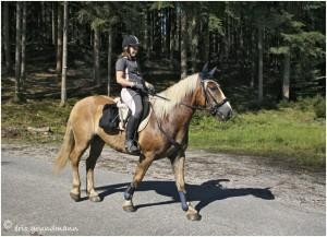 https://www.waibe.fr/sites/photoeg/medias/images/__HIDDEN__galerie_45/chevaux_025.jpg