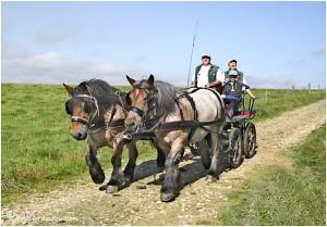 https://www.waibe.fr/sites/photoeg/medias/images/__HIDDEN__galerie_45/chevaux_027.jpg
