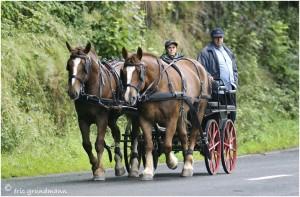 https://www.waibe.fr/sites/photoeg/medias/images/__HIDDEN__galerie_45/chevaux_028.jpg