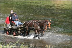 https://www.waibe.fr/sites/photoeg/medias/images/__HIDDEN__galerie_45/chevaux_03.jpg