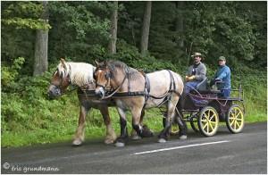 https://www.waibe.fr/sites/photoeg/medias/images/__HIDDEN__galerie_45/chevaux_030.jpg