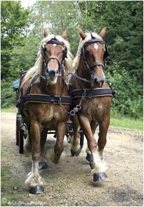 https://www.waibe.fr/sites/photoeg/medias/images/__HIDDEN__galerie_45/chevaux_031.jpg