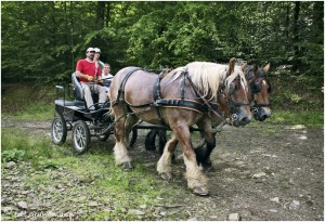 https://www.waibe.fr/sites/photoeg/medias/images/__HIDDEN__galerie_45/chevaux_032.jpg