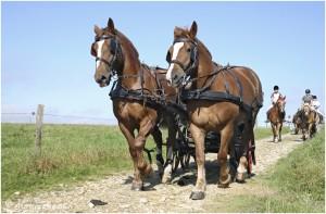 https://www.waibe.fr/sites/photoeg/medias/images/__HIDDEN__galerie_45/chevaux_033.jpg