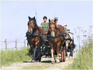 https://www.waibe.fr/sites/photoeg/medias/images/__HIDDEN__galerie_45/chevaux_035.jpg