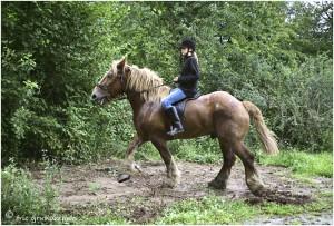 https://www.waibe.fr/sites/photoeg/medias/images/__HIDDEN__galerie_45/chevaux_036.jpg