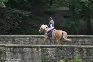 https://www.waibe.fr/sites/photoeg/medias/images/__HIDDEN__galerie_45/chevaux_037.jpg