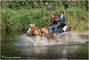 https://www.waibe.fr/sites/photoeg/medias/images/__HIDDEN__galerie_45/chevaux_038.jpg