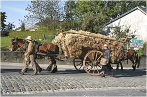 https://www.waibe.fr/sites/photoeg/medias/images/__HIDDEN__galerie_45/chevaux_05.jpg