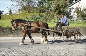 https://www.waibe.fr/sites/photoeg/medias/images/__HIDDEN__galerie_45/chevaux_06.jpg