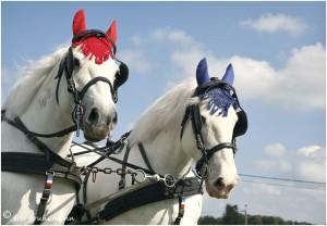 https://www.waibe.fr/sites/photoeg/medias/images/__HIDDEN__galerie_45/chevaux_07.jpg