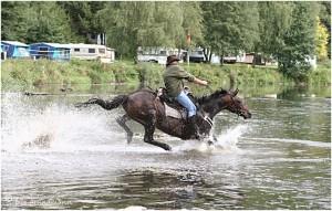 https://www.waibe.fr/sites/photoeg/medias/images/__HIDDEN__galerie_45/chevaux_09.jpg