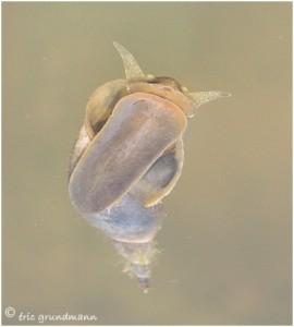 https://www.waibe.fr/sites/photoeg/medias/images/new_nature/2013-cagouille_d__eau_06c.jpg
