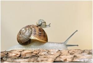 https://www.waibe.fr/sites/photoeg/medias/images/new_nature/cagouille_bebe15x22_04.jpg