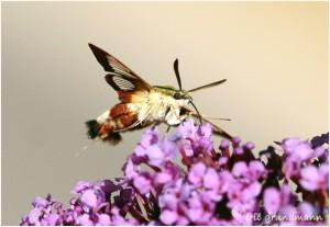 https://www.waibe.fr/sites/photoeg/medias/images/new_nature/sphinx_gaze_04.jpg