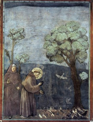 GiottoPredicaAgliUccelli